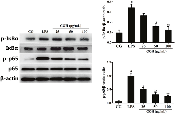 Effects of GOH on the NF-κB pathway activation in LPS-stimulated RAW 264.7 cells.
