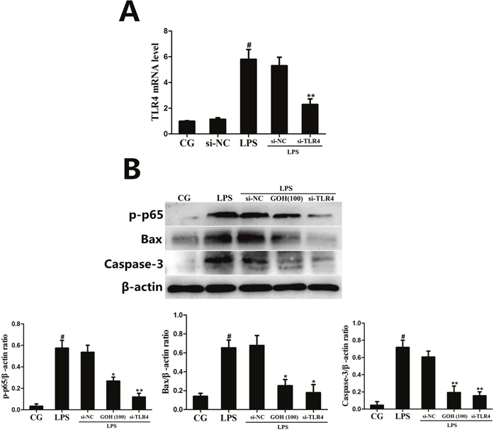 The effects of GOH are mediated through TLR4.