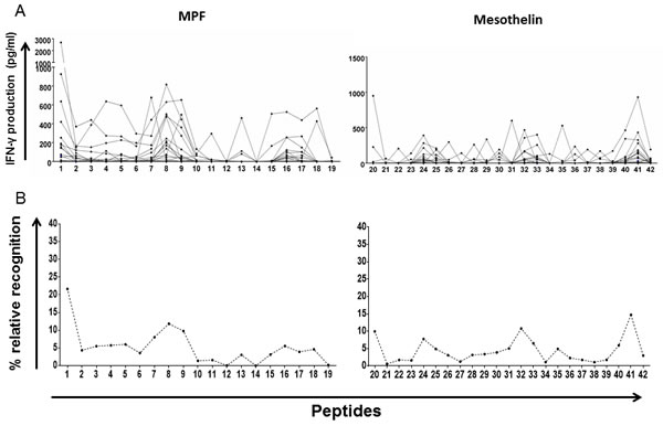 Whole-blood IFN-γ responses to peptides spanning the MPF and mature mesothelin components.