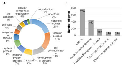Gene Ontology and disease and disorder enrichment analysis.
