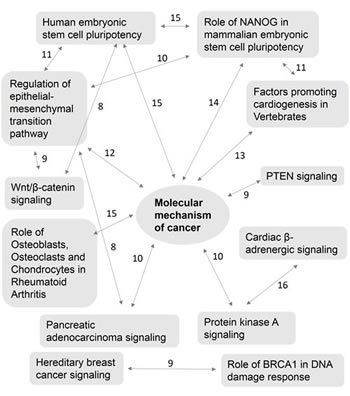 Complex interaction of multiple canonical pathways and their common genes.