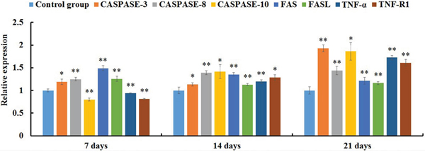 The expression levels of mRNAs involved in the death receptor pathway of the jejunal cell apoptosis of the AFB1-fed chicken and expressed as fold change relative to the control group.