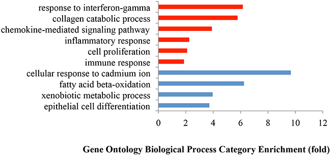 Gene Ontology enrichment analysis of biological processes of the differentially expressed genes between tumors and normal tissues.
