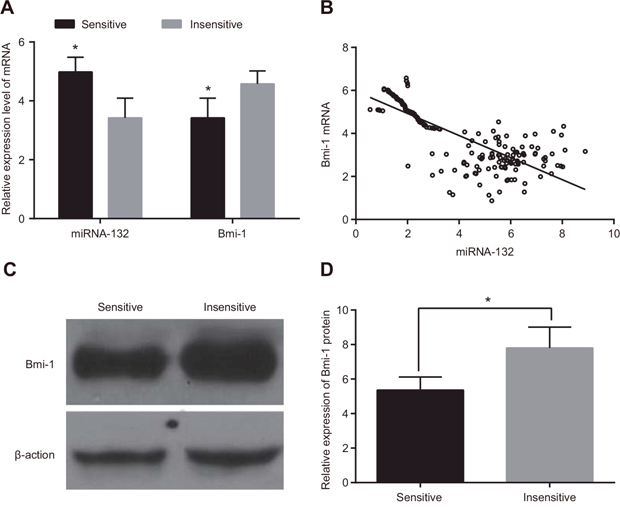 Comparison of miR-132 and Bmi-1 expression in radiotherapy-sensitive and insensitive patients.