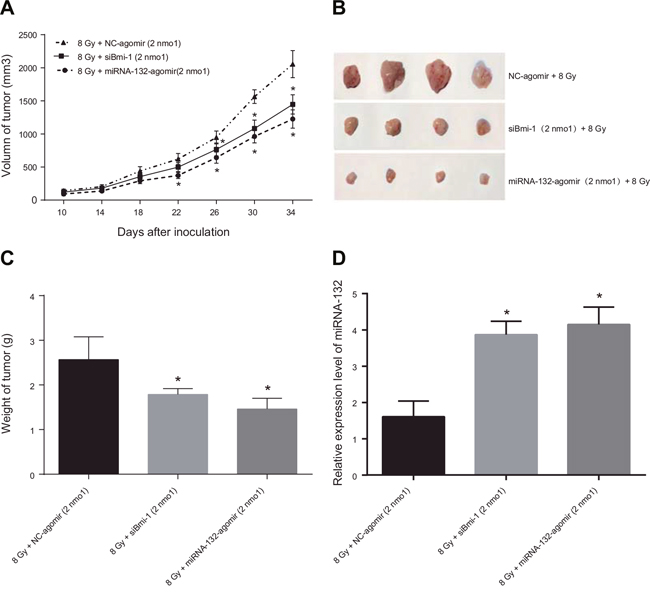 Effects of miR-132 on the radiosensitivity of Hela cell-induced tumors in nude mice.