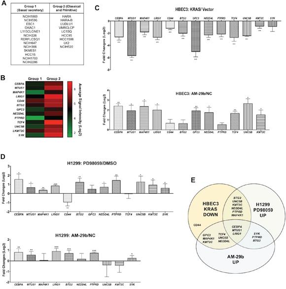 miR-29b dependent transcriptional suppression of TSGs downstream of KRAS transformation.