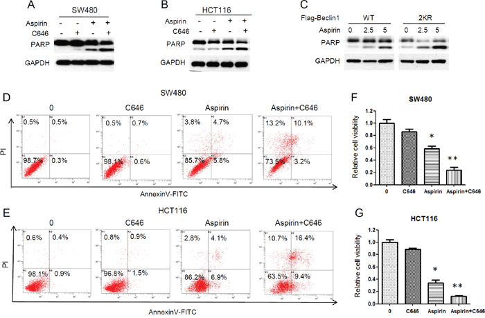 Inhibition of Beclin 1 acetylation by C646 promoted aspirin-induced cell death.