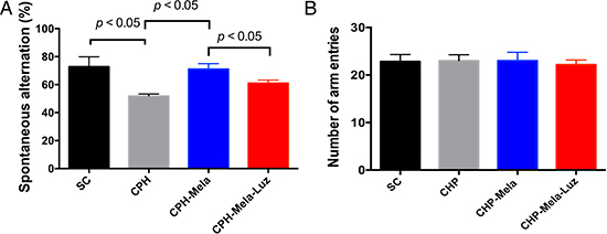 Effects of melatonin and melatonin with MT2 receptor antaginist on spatial working memory in mice post-BCAS at day-28.