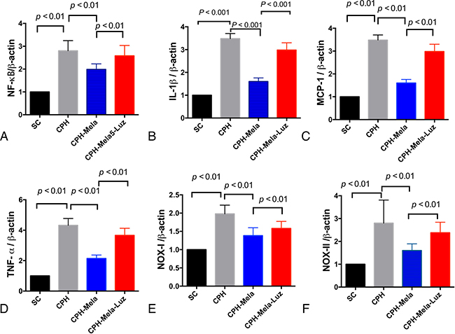 The mRNA expressions of inflammatory and oxidative markers in cerebral cortex by day 30 after chronic cerebral hypoperfusion (CHP) procedure (n = 6).