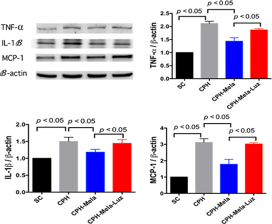 Changes in protein expressions of inflammatory markers at 30 days in mice with chronic cerebral hypoperfusion.