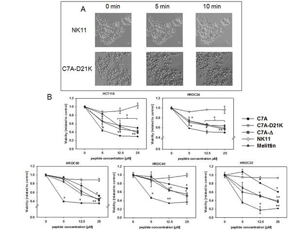 Short-term exposure of HDPs towards tumor cells.