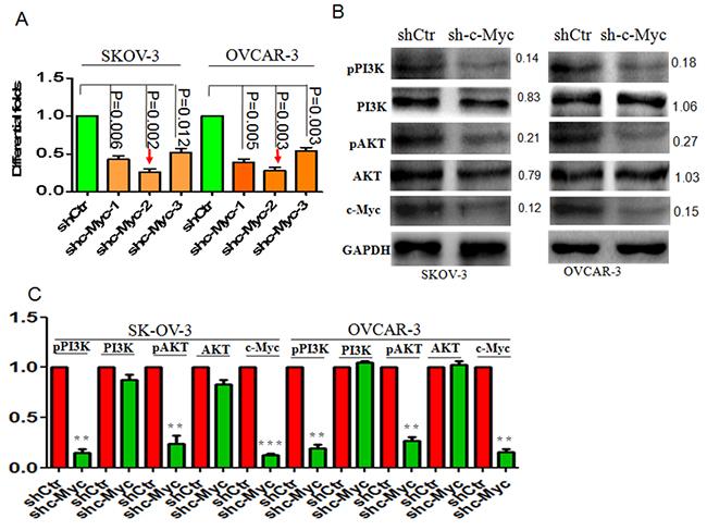 c-Myc knockdown suppresses pPI3K/AKT signaling in ovarian cancer.