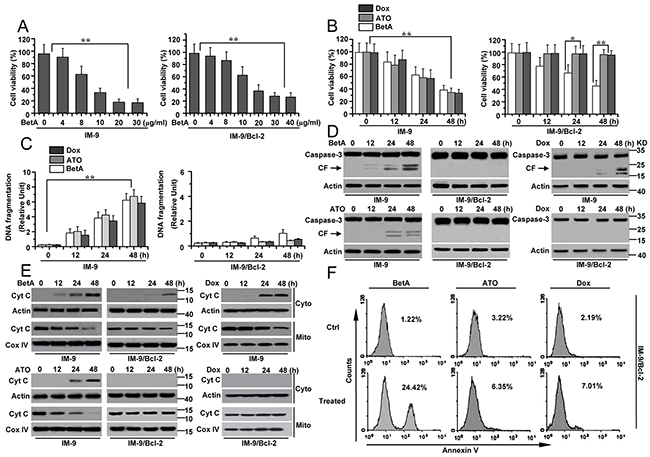 BetA induces apoptosis-independent cell death in IM-9/Bcl-2 and apoptosis in IM-9 cancer cells.