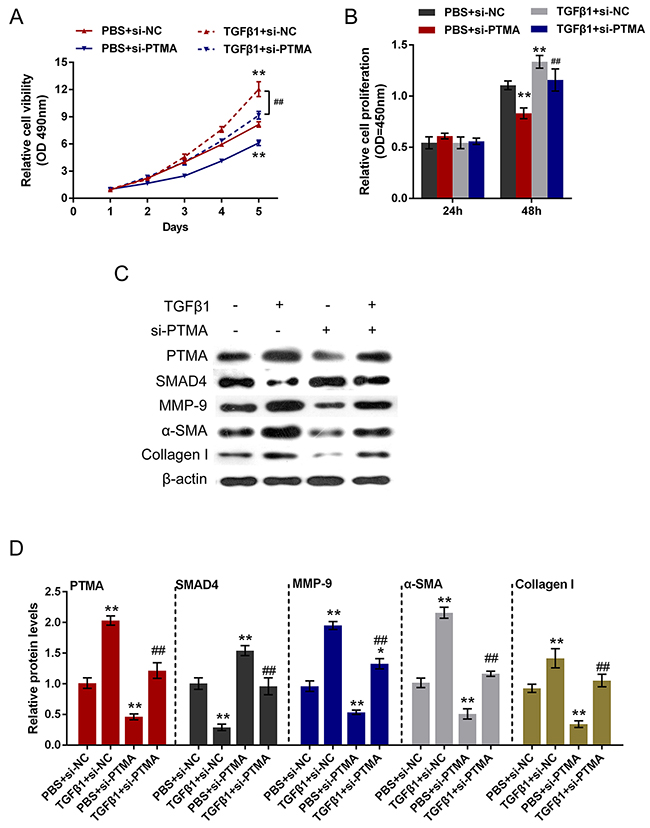 Role of si-PTMA in TGFβ1-induced fibrosis process.
