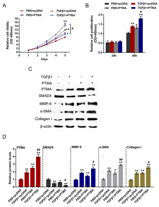 Role of PTMA overexpression in TGFβ1-induced fibrosis process.