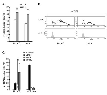 DNA rereplication causes the death of CDT2 depleted cells.
