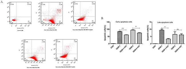 Flow cytometric analysis of Annexin V–FITC/PI to quantify gemcitabine-induced apoptosis in Patu8988 cells.