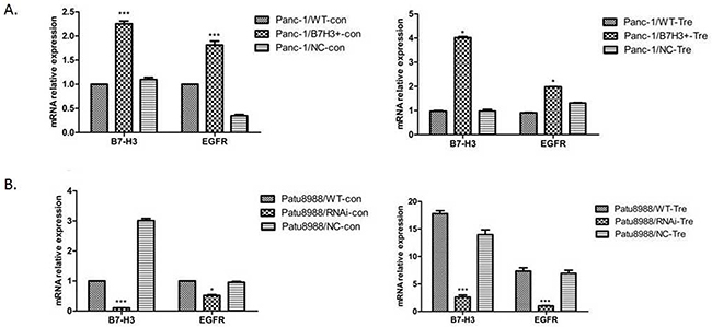 Relative mRNA expression of B7-H3 and EGFR was analyzed using the 2−ΔΔCt method for different cell lines.