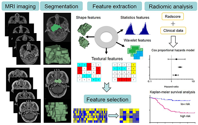 The image post-processing workflow. Image segmentation is performed on contrast-enhanced T1-w and T2-w MRI images