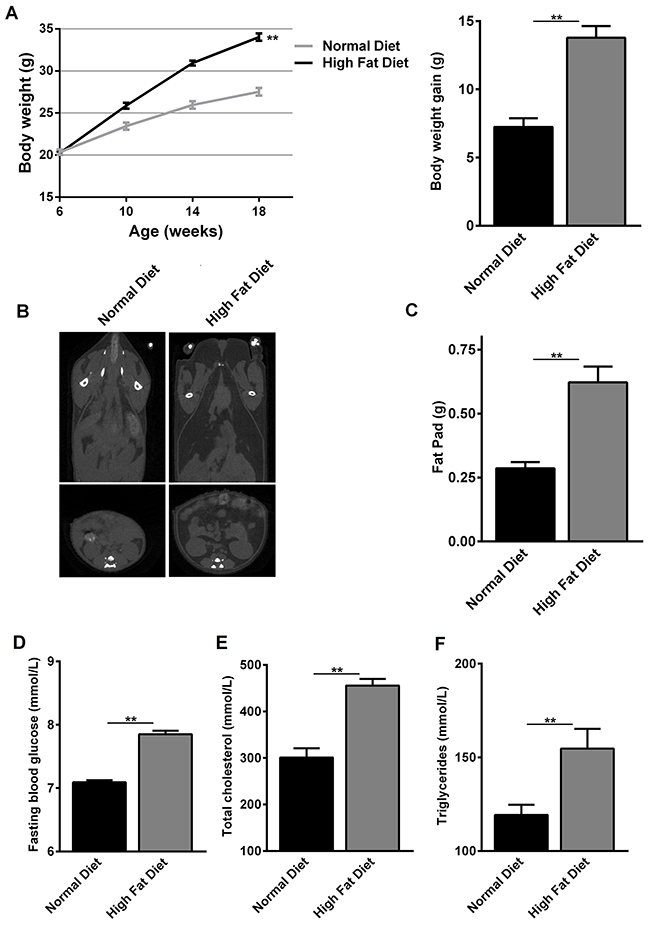 Changes in body weight and metabolic parameters of normal diet- and high fat diet-fed C57BL/6 mice.