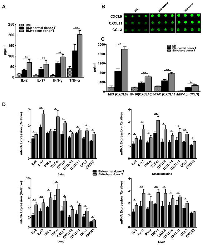 Obese donor enhances the expression of pro-inflammatory mediators in recipients systemically and in aGVHD targeted organs.