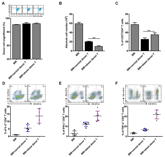 Obese donor splenocytes lead to an increase of CD4+ T cells in the spleen of recipients during aGVHD.