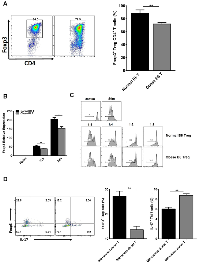 Obese donor leads to increased Th17 cells differentiation but inhibited Tregs differentiation and functional activity in vitro and in vivo.