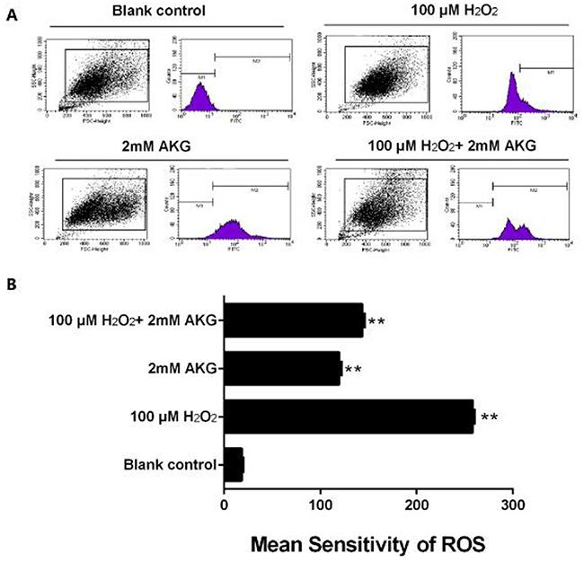 ROS content in IPEC-J2 cells.