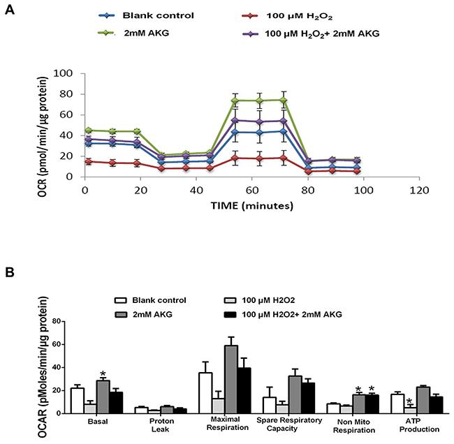 Mitochondrial respiration of IPEC-J2 cells.