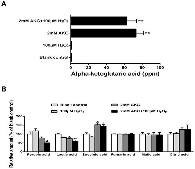 The TCA cycle intermediates, pyruvic acid, and lactic acid of IPEC-J2 cells.
