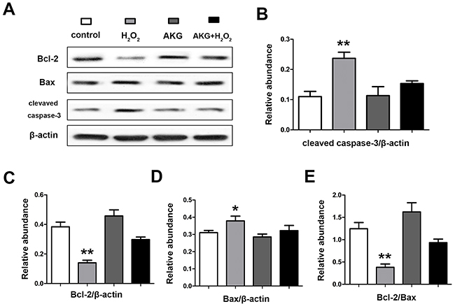 Abundances of apoptosis associated proteins in IPEC-J2 cells determined by western blot analysis.