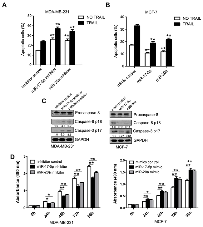 Inhibition of TRAIL-induced apoptosis by miR-17-5p/miR-20a in breast cancer cells.