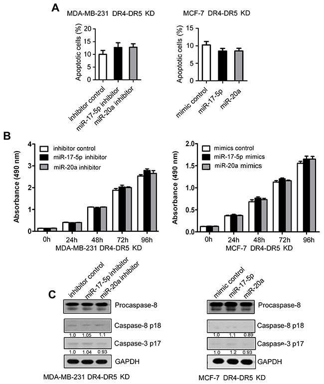 Inhibition of TRAIL-induced apoptosis by miR-17-5p/20a through DR4 and DR5 in breast cancer cells.