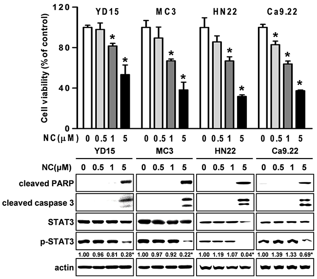 The effect of NC on cell growth and apoptosis in four other different oral cancer cell lines (YD15, MC3, HN22 and Ca9.22).