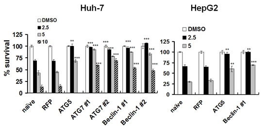 Protection of HCC cells from lapatinib-induced cytotoxicity by the knockdown of autophagy-related proteins. After transduction with shRNA expression lentivirus as indicated, Huh7 or HepG2 cells were selected and were treated with DMSO or 2.5 - 10 μM lapatinib for 48h, and then the relative percentages of growth inhibition were detected using the MTS assay and calculated as described in Fig. 1.