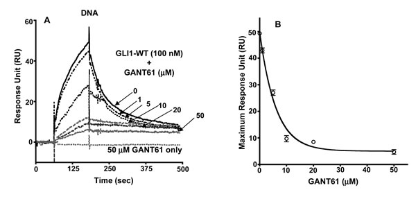 SPR of: A: Immobilized DNA +/- GLI1 (100 nM) +/- GANT61 at varied concentrations (1-50 µM); B: Maximum RU vs concentration of GANT61.