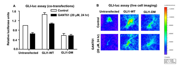 GLI-luciferase reporter assays in HT29 cells under 2 different conditions: