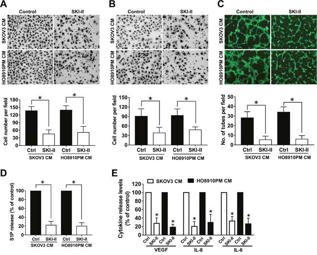 Effect of SphK inhibition by SKI-II on angiogenesis in vitro.