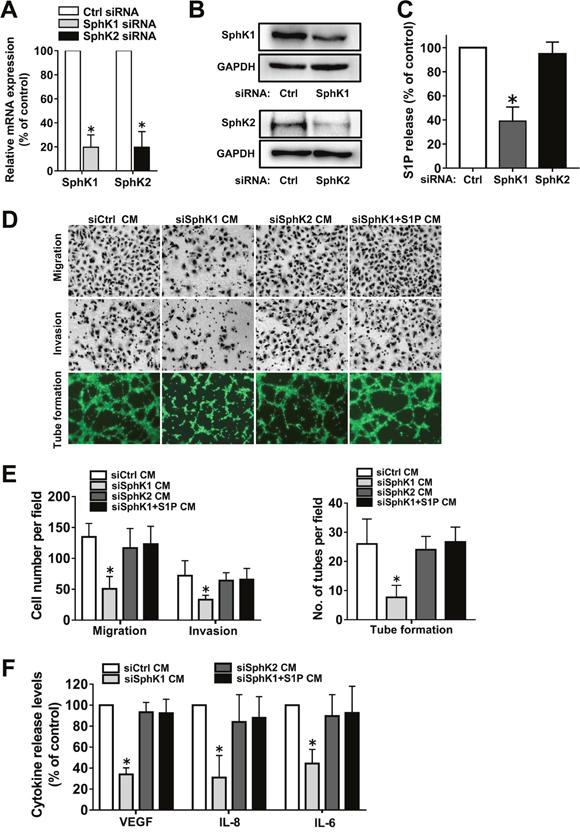 Effect of SphK1 or SphK2 blockage on angiogenesis in vitro.