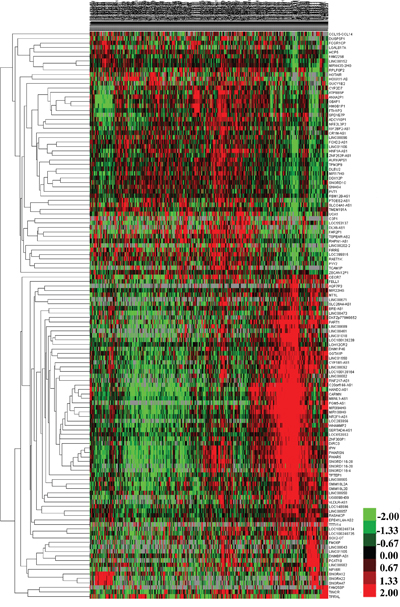 The differential expression of intersected lncRNAs in gastric cancer.