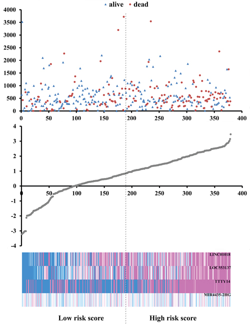 Risk score analysis of the differentially expressed lncRNA signature of gastric cancer.