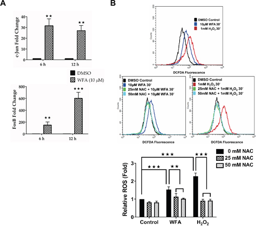 WFA treatment increased C-JUN/FOSB expression and ROS production in MDS-L cells.