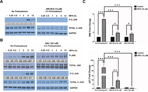 WFA-induced ROS mediates JNK/AP-1 signaling.