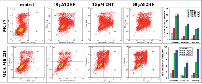 2HF induces apoptosis as assessed by Annexin V Assay. MCF7 and MDA-MB-231 cells were incubated with or without test compound for 24 h, washed and harvested.