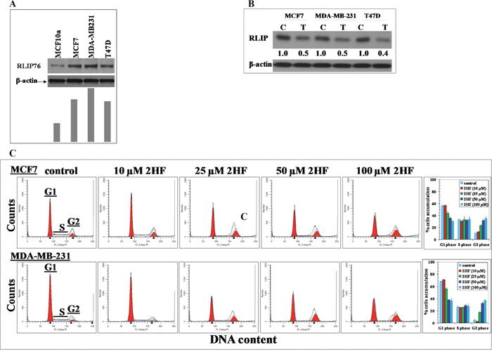 2HF decreases RLIP76 protein levels and inhibits cell cycle progression in human breast cancer cells.