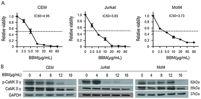 Berbamine (BBM) inhibits the growth of T-ALL cells partially by targeting CaMKIIγ.