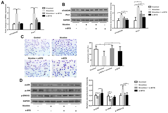 Effects of specific inhibition of α7nAChR on Prx1, apoptosis and MAPK in DOK cells.