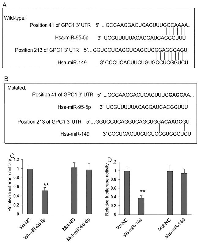 MiR-96-5p and miR-149 regulate GPC1 expression.