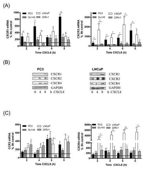 Autocrine CXCL8 signaling increases chemokine receptor expression in prostate cancer cells.