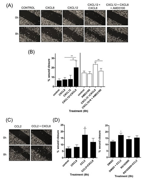 CXCL12 signaling potentiates the chemotactic migration of PC3 cells.